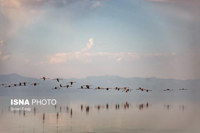پارک ملی دریاچه ارومیه میزبان 500 قطعه پرنده غول پیکر شد