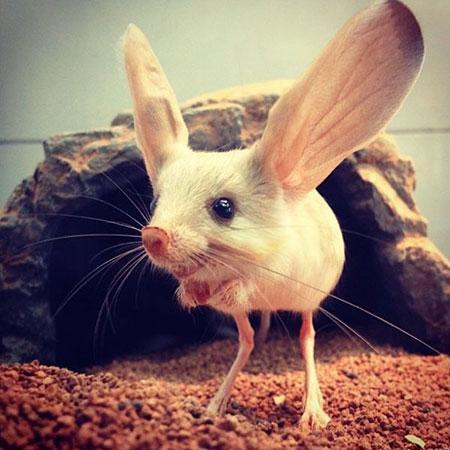 حیواناتی عجیب که موجب حیرت شما خواهند شد!