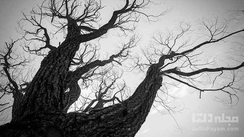درخت شیطان کجاست؟