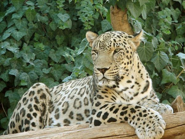 گونه های جانوری کمیاب ایرانی